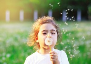 Child blowing dandelion into the wind